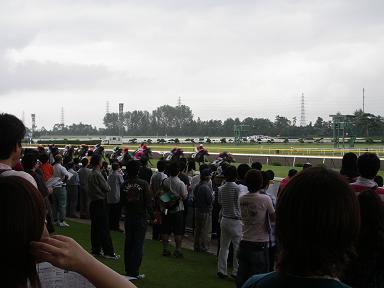 2008年新潟最終レース