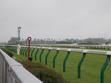 新潟競馬場の直線